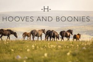 Online Equestrian Suppliers Retailer