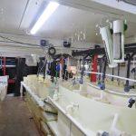 brine shrimp production