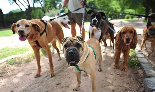 Successful Expanding Dog Walking Business